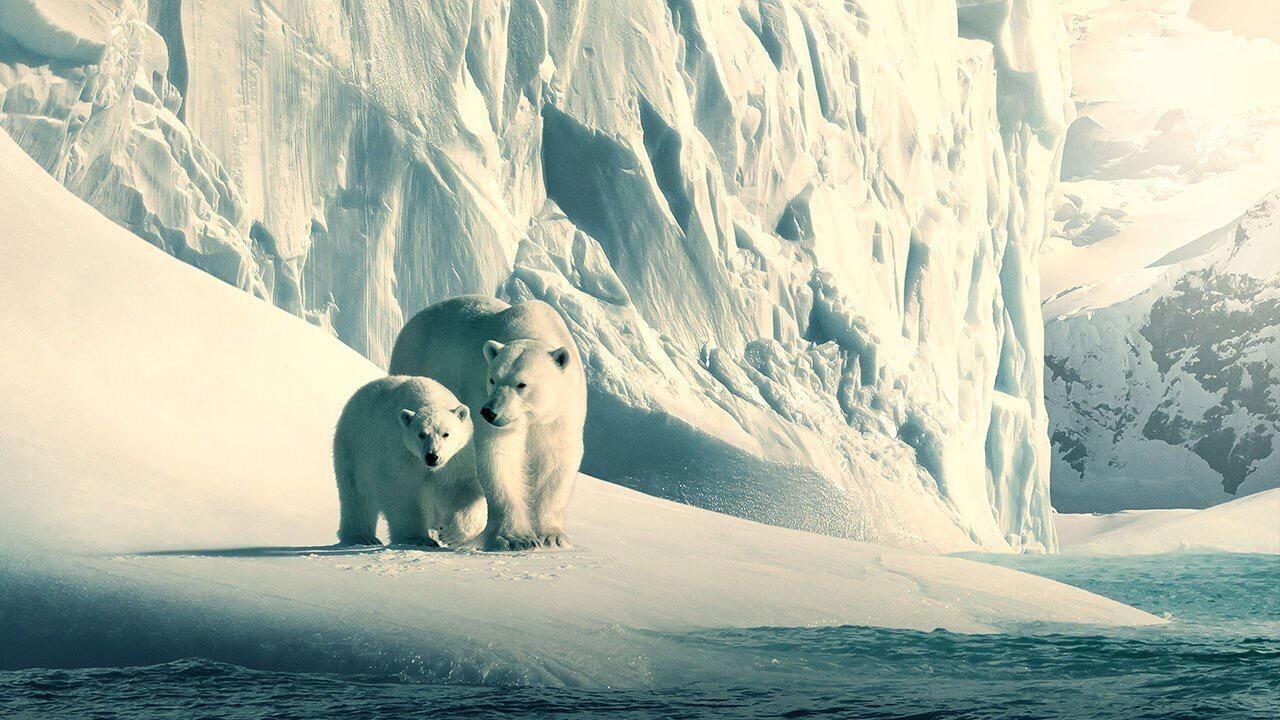oso polar, planeta, medioambiente