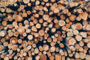 troncos, arboles, sequia