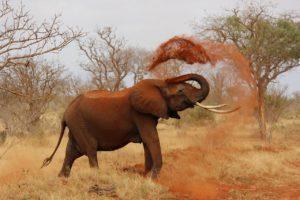 elefante, biodiversidad
