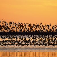 Las aves de Doñana, en peligro
