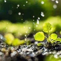 El regadío consume un 15% menos de agua por hectárea