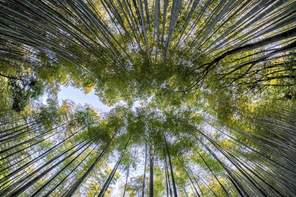 Bosque Tropical Imagen de Thanapat Pirmphol en Pixabay