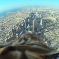 A vista de águila