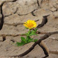 La crisis del agua, una preocupación global