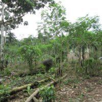 El mundo ha perdido 178 millones de hectáreas de bosque en 30 años