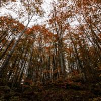 España, tercera masa forestal de Europa, reivindica el papel mitigador de los bosques