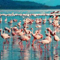"Kenia anuncia la ""muerte"" del lago Nakuru"