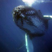El Congreso Mundial de la Naturaleza vuelve a aplazarse por la covid