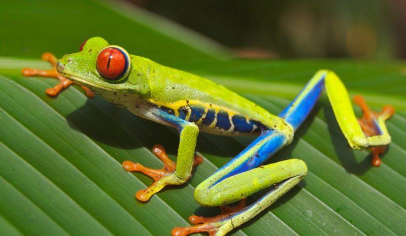 La ONU quiere lograr la protección del 30% de la biodiversidad en 2030