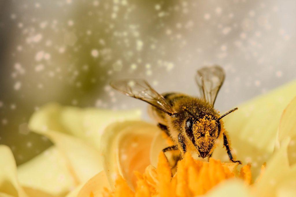 abeja, agua, colmena, polinizador