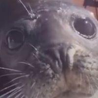 Una foca logra salvar su vida por los pelos