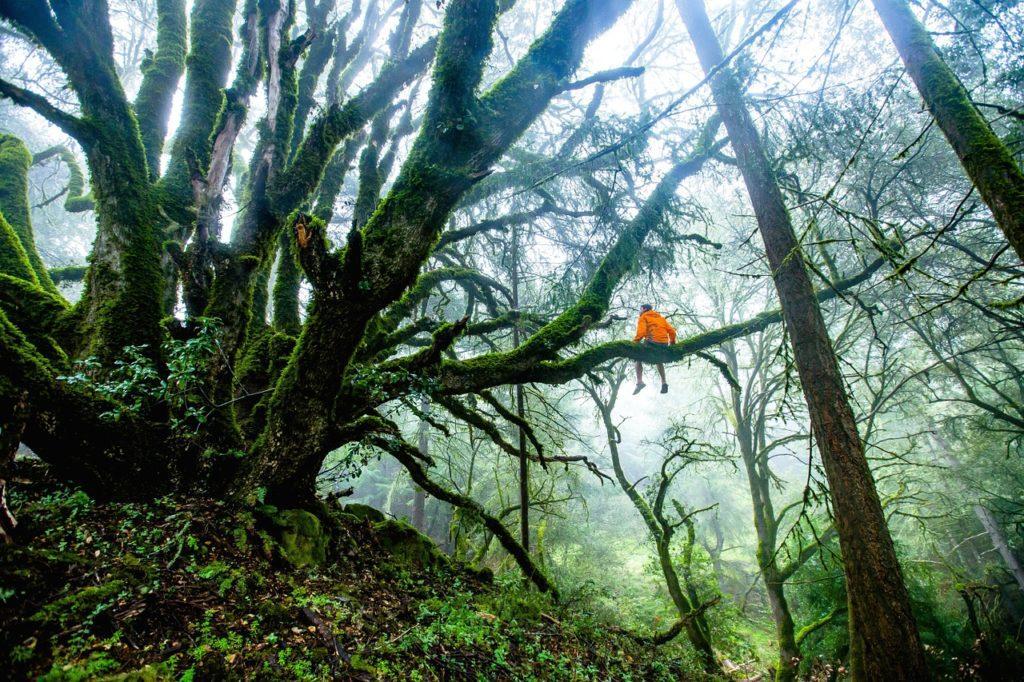 árbol, biodiversidad, bosque, extinción, fauna, animales