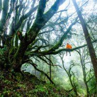 El planeta ha perdido 420 millones de hectáreas de bosques en 30 años