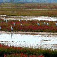 Islas de biodiversidad para salvar el lago Marker