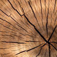 Los árboles pronostican una sequía sin precedentes