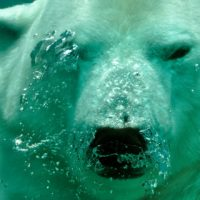Estados Unidos bloquea al Consejo del Ártico
