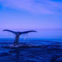 Especies marinas, las más vulnerables al calentamiento