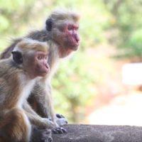 El consumo mundial amenaza la vida de los primates