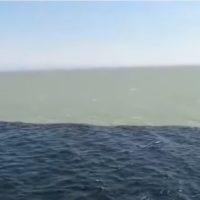 Golfo de Alaska, el lugar donde dos aguas se juntan