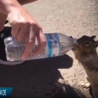 Una ardilla sedienta pide agua a un turista