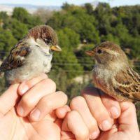 Depuradoras, nidos de biodiversidad