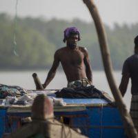 Los Sundarbans: el ecosistema protector que necesita protección