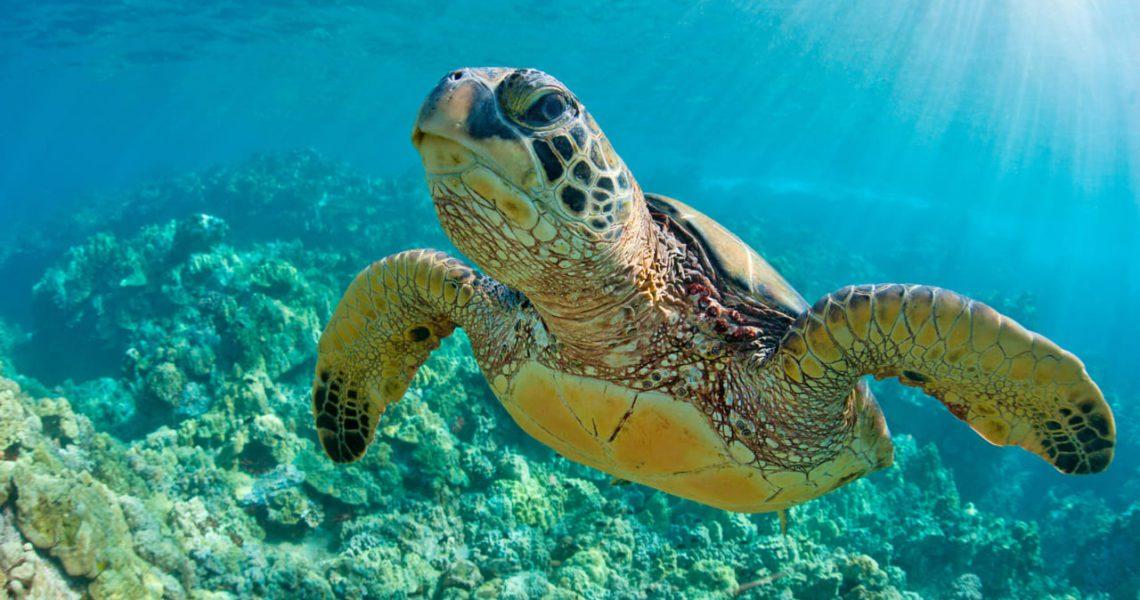 Tortugas marinas: un espectáculo natural en peligro de extinción ...