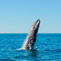 Las 10 especies marinas al borde de la extinción