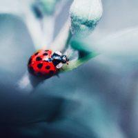 El control biológico de plagas frena el uso de fitosanitarios