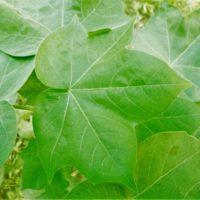 La tasa de extinción <br>de plantas se ha multiplicado por 500