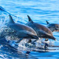 Los delfines se hacen amigos si comparten intereses