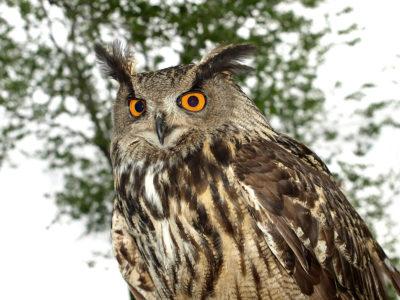 Biodiversidad, agua, fauna, EDAR,, depuradoras, aves