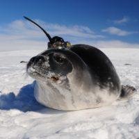 Descubren el origen de los agujeros en el hielo marino de la Antártida