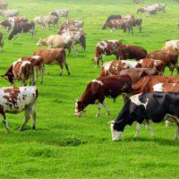 Bruselas da luz verde al almacenamiento privado para lácteos y cárnicos