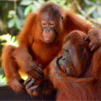 El consumo mundial amenaza a los primates
