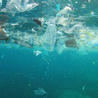 Un plancton 'asesino de peces' invade los microplásticos