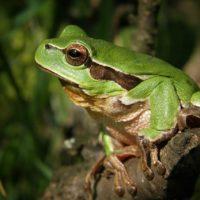 Los anfibios, afectados por el cambio climático