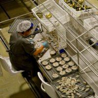 Galicia lidera dos proyectos europeos de aguas residuales en conserveras y cultivos