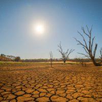 En los climas cálidos los árboles pueden intensificar las sequías