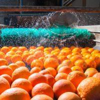 La huella hídrica de los alimentos