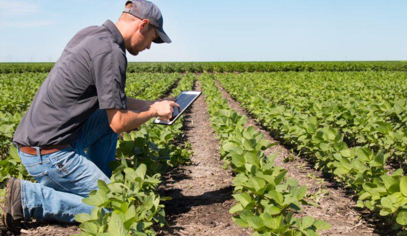Andalucía lanzará un nanosatélite para adaptar su agricultura al cambio climático