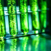 Recursos marinos, nuevas soluciones para la salud y la alimentación
