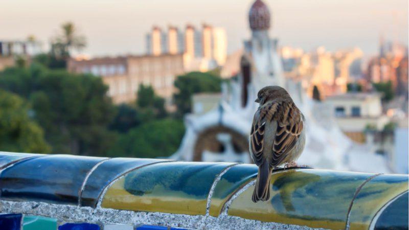 Ciudades más verdes para aumentar la presencia de aves