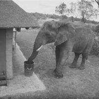 Un elefante muy concienciado