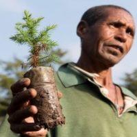Etiopía planta en un día 350 millones de árboles