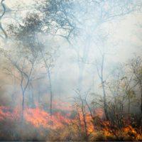 El humo de los incendios africanos fertiliza la selva amazónica y el Atlántico