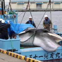 La caza de ballenas se reanuda en Japón