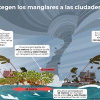 Los manglares mitigan las pérdidas económicas tras el paso de un ciclón
