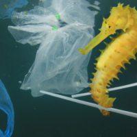 Proponen ocho medidas simultáneas para salvar los océanos