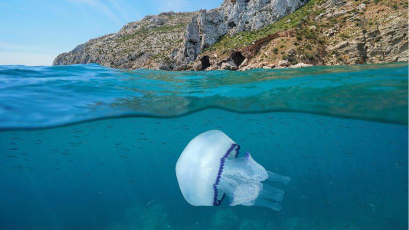 Alerta por el aumento de medusas en las playas